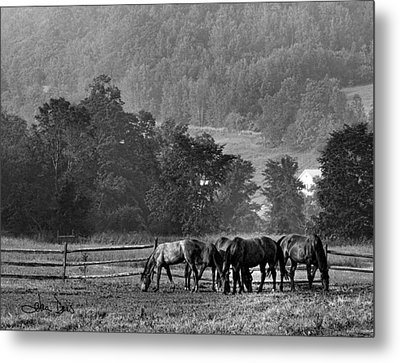 Metal Print featuring the photograph Broodmares by Joan Davis