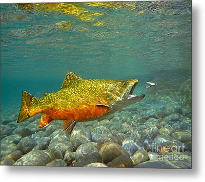Brook Trout And Coachman Wet Fly Metal Print by Paul Buggia