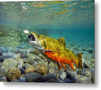 Brook Trout And Mepp's  Metal Print by Paul Buggia