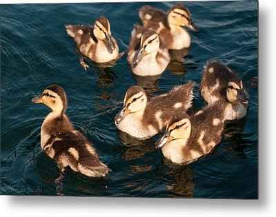 Metal Print featuring the photograph Brothers And Sisters by Brenda Jacobs