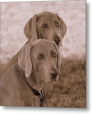 Brothers Metal Print by Barbara Dudley