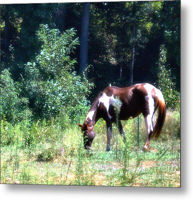 Brown And White Horse Grazing Metal Print by Eva Thomas