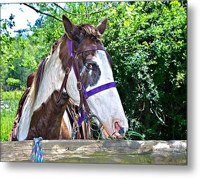 Metal Print featuring the photograph Brown And White Horse by Susan Leggett