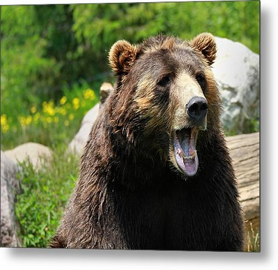 Brown Bear Awakening Metal Print