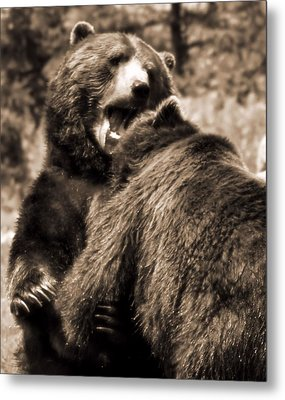 Brown Bear Competition Metal Print