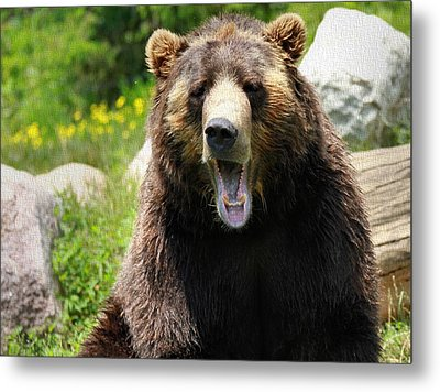 Brown Bear Yawn Metal Print