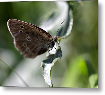 Metal Print featuring the photograph Brown Butterfly On Leaf by Leif Sohlman