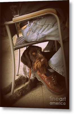 Metal Print featuring the photograph Brown Dog by Tanya  Searcy