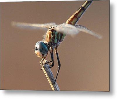 Brown Dragonfly Metal Print