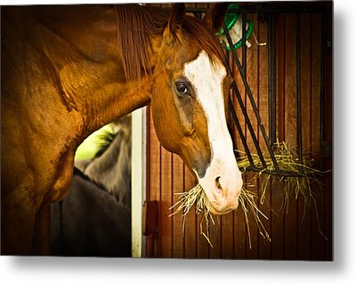 Metal Print featuring the photograph Brown Horse by Joann Copeland-Paul