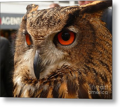 Brown Owl Metal Print by Vicki Spindler