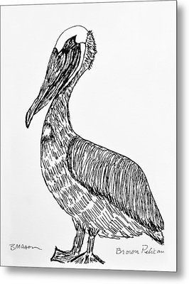 Brown Pelican Metal Print by Becky Mason