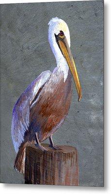 Brown Pelican Metal Print by Elaine Hodges