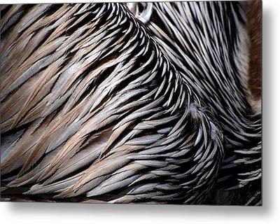 Brown Pelican Feathers Metal Print