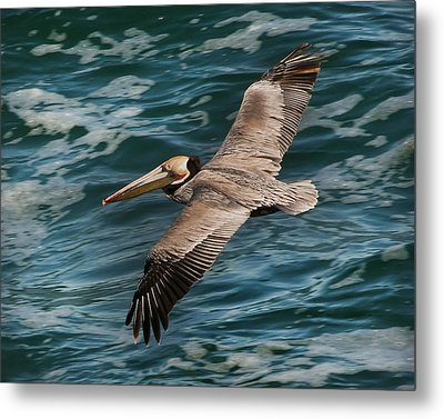 Metal Print featuring the photograph Brown Pelican Flying 1 by Lee Kirchhevel