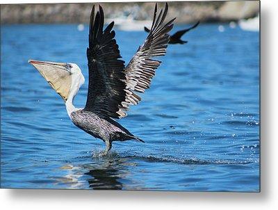 Brown Pelican Landing Metal Print
