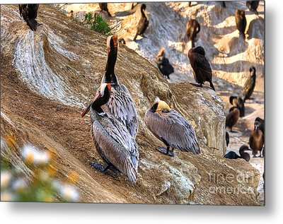 Metal Print featuring the photograph Brown Pelicans At Rest by Jim Carrell