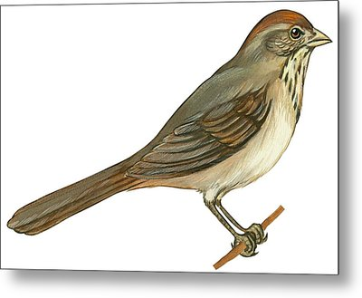 Brown Towhee Metal Print