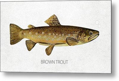 Brown Trout Metal Print by Aged Pixel