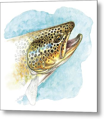 Brown Trout Study Metal Print by JQ Licensing