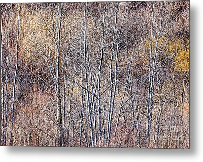 Brown Winter Forest With Bare Trees Metal Print