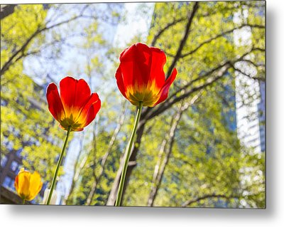 Bryant Park Tulips New York  Metal Print by Angela A Stanton