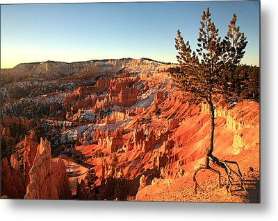 Bryce Canyon Metal Print by Darryl Wilkinson