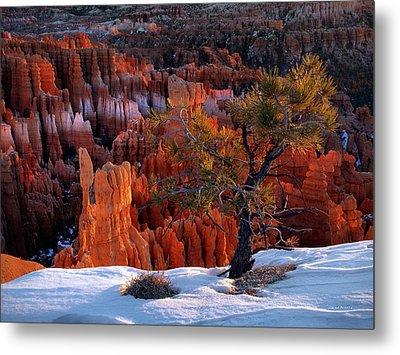 Bryce Canyon Winter Light Metal Print by Leland D Howard