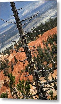 Bryce Tree Metal Print