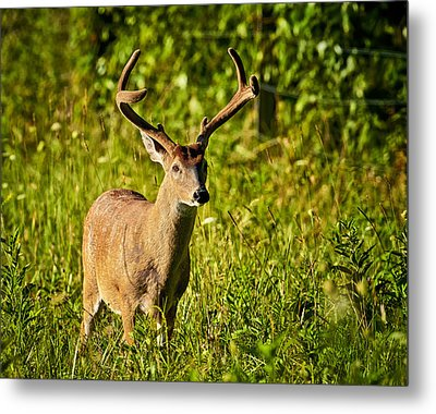 Metal Print featuring the photograph Buck by Tyson and Kathy Smith