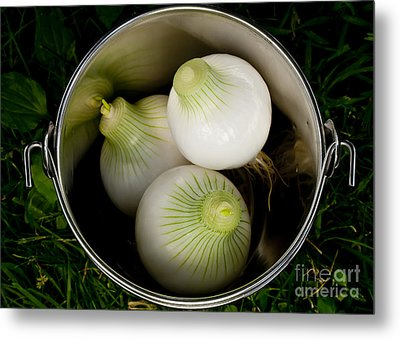 Bucket Of Onions Metal Print by Wilma  Birdwell