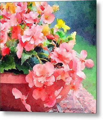 Bucket O Begonias Metal Print by Anna Porter