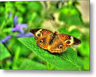Metal Print featuring the photograph Buckeye Butterfly by Ed Roberts