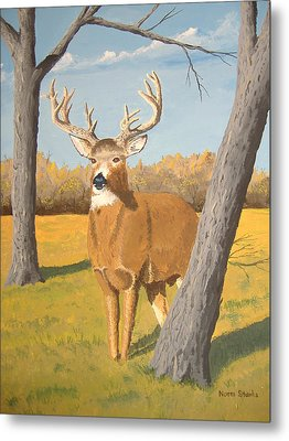 Bucky The Deer Metal Print by Norm Starks