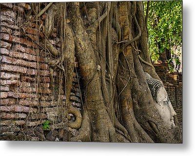 Buddha Head Encased In Tree Roots Metal Print