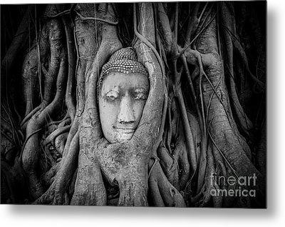 Buddha In The Banyan Tree Metal Print