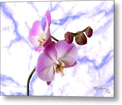 Budding Orchids Metal Print