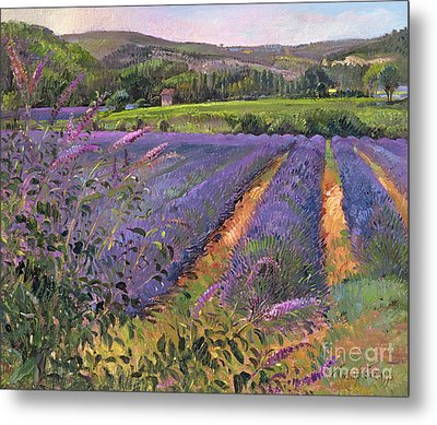 Buddleia And Lavender Field Montclus Metal Print by Timothy Easton