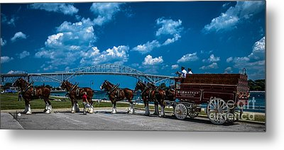 Budweiser Clydsdales And Blue Water Bridges Metal Print