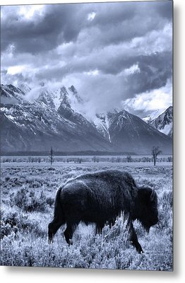 Buffalo And Mountain In Jackson Hole Metal Print by Dan Sproul