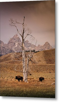 Metal Print featuring the photograph Buffalo And Tetons by Janis Knight