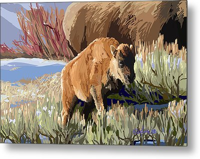 Buffalo Calf Metal Print