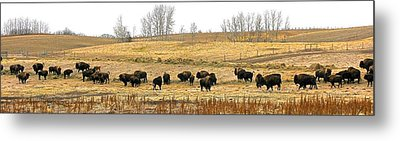 Buffalo Late Fall Metal Print by Brian Sereda
