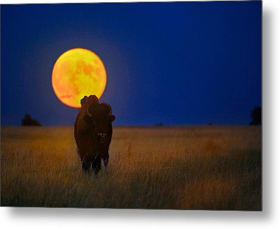 Buffalo Moon Metal Print by Kadek Susanto
