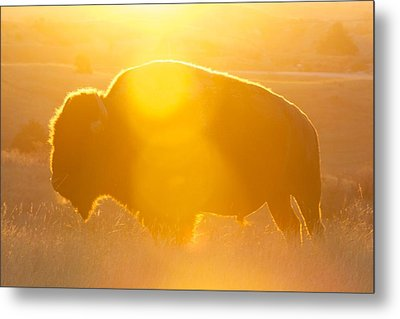 Metal Print featuring the photograph Buffalo Sunrise by Kevin Bone