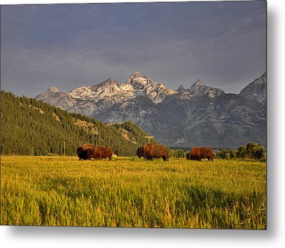 Buffalo Sunrise Metal Print