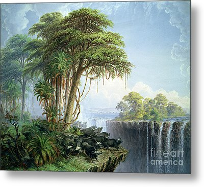 Buffalos Driven To The Edge Of The Chasm Opposite Garden Island Victoria Falls Metal Print by Thomas Baines