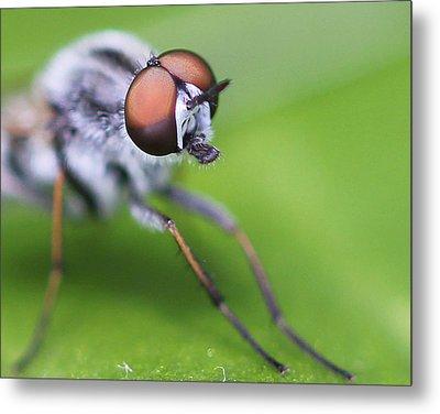 Bug Off Metal Print