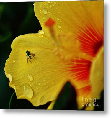 Bugged Hibiscus Metal Print by Craig Wood