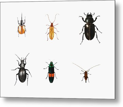 Bugs Metal Print